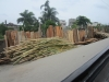 Haiti Love 248
